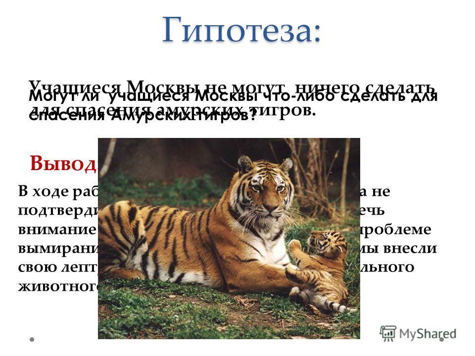 Гипотеза: Могут ли учащиеся Москвы что-либо сделать для спасения Амурских тигров? Учащиеся Москвы не могут ничего сделать для спасения амурских тигров. Вывод: В ходе работы над проектом наша гипотеза не подтвердилась. Так как нам удалось привлечь вни