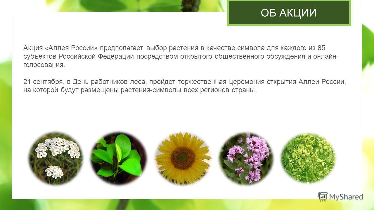 ОБ АКЦИИ Акция «Аллея России» предполагает выбор растения в качестве символа для каждого из 85 субъектов Российской Федерации посредством открытого общественного обсуждения и онлайн- голосования. 21 сентября, в День работников леса, пройдет торжестве