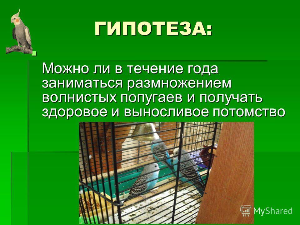 ГИПОТЕЗА: Можно ли в течение года заниматься размножением волнистых попугаев и получать здоровое и выносливое потомство Можно ли в течение года заниматься размножением волнистых попугаев и получать здоровое и выносливое потомство