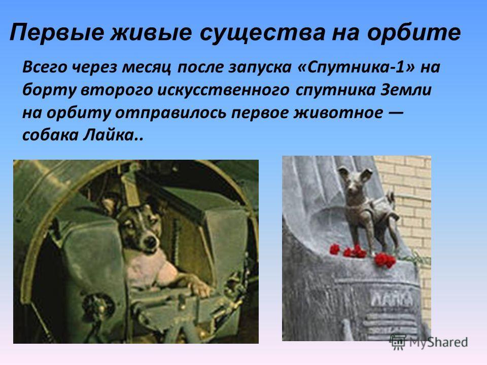 Первые живые существа на орбите Всего через месяц после запуска «Спутника-1» на борту второго искусственного спутника Земли на орбиту отправилось первое животное собака Лайка..