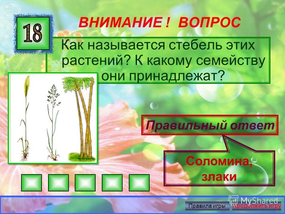 ВНИМАНИЕ ! ВОПРОС Какому растению семейства пасленовые принадлежит этот цветок? Правильный ответ Картофель Правила игрыПродолжить игру