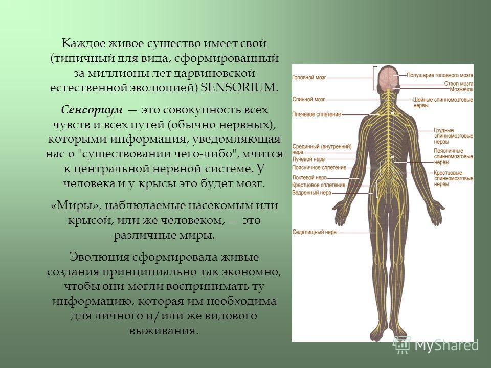 Каждое живое существо имеет свой (типичный для вида, сформированный за миллионы лет дарвиновской естественной эволюцией) SENSORIUM. Сенсориум это совокупность всех чувств и всех путей (обычно нервных), которыми информация, уведомляющая нас о