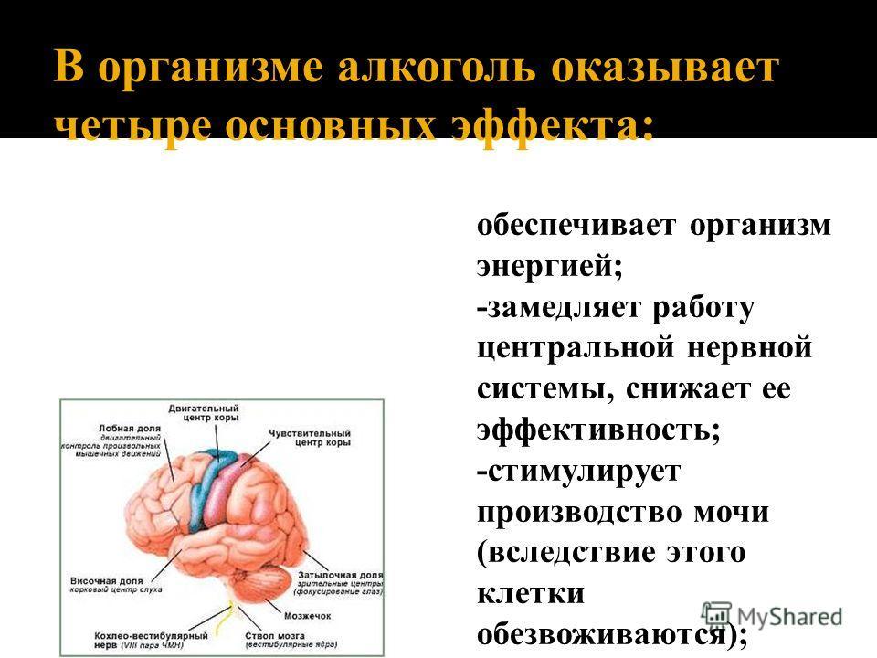 В организме алкоголь оказывает четыре основных эффекта: обеспечивает организм энергией; -замедляет работу центральной нервной системы, снижает ее эффективность; -стимулирует производство мочи (вследствие этого клетки обезвоживаются); -выводит из стро
