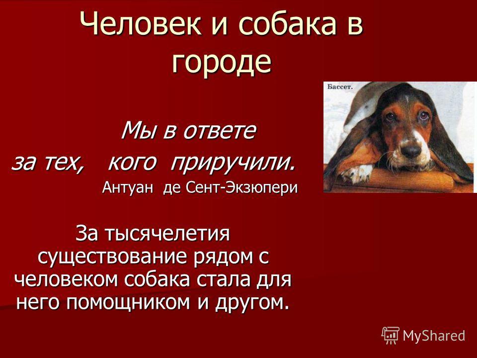 Человек и собака в городе Мы в ответе Мы в ответе за тех, кого приручили. Антуан де Сент-Экзюпери Антуан де Сент-Экзюпери За тысячелетия существование рядом с человеком собака стала для него помощником и другом.