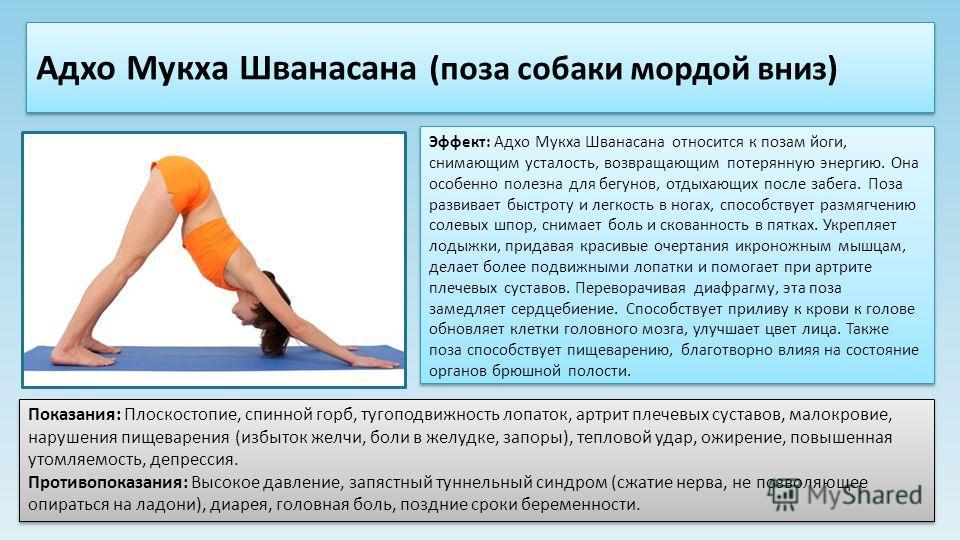 Эффект: Адхо Мукха Шванасана относится к позам йоги, снимающим усталость, возвращающим потерянную энергию. Она особенно полезна для бегунов, отдыхающих после забега. Поза развивает быстроту и легкость в ногах, способствует размягчению солевых шпор, с