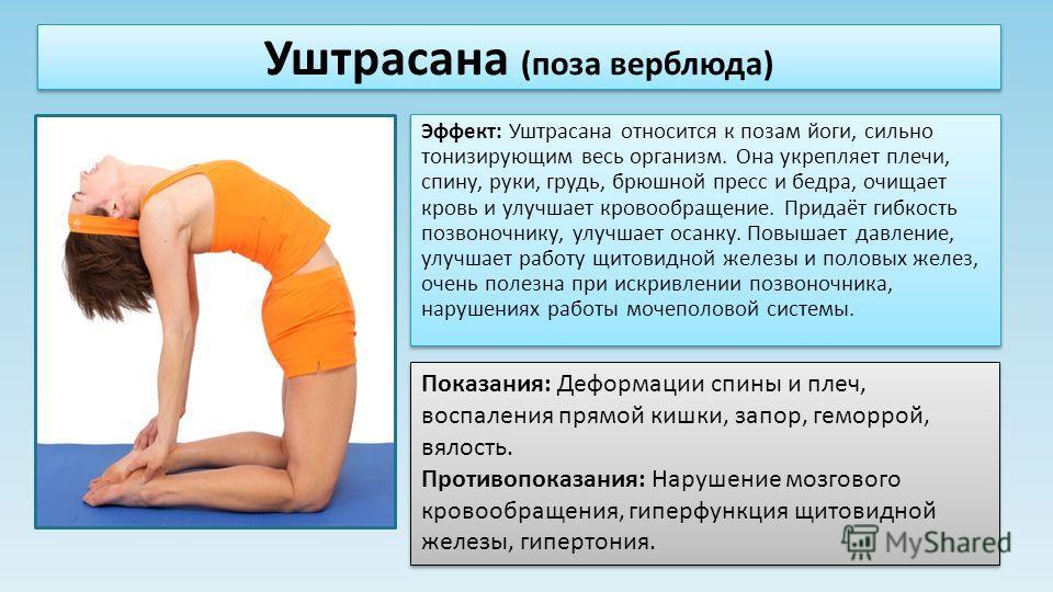 Эффект: Уштрасана относится к позам йоги, сильно тонизирующим весь организм. Она укрепляет плечи, спину, руки, грудь, брюшной пресс и бедра, очищает кровь и улучшает кровообращение. Придаёт гибкость позвоночнику, улучшает осанку. Повышает давление, у
