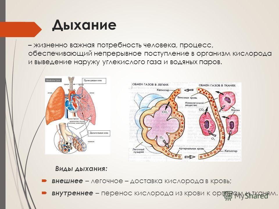 Дыхание Виды дыхания: внешнее – легочное – доставка кислорода в кровь; внутреннее – перенос кислорода из крови к органам и тканям. – жизненно важная потребность человека, процесс, обеспечивающий непрерывное поступление в организм кислорода и выведени