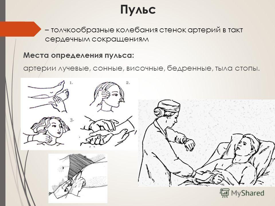 Пульс Места определения пульса: артерии лучевые, сонные, височные, бедренные, тыла стопы. – толчкообразные колебания стенок артерий в такт сердечным сокращениям