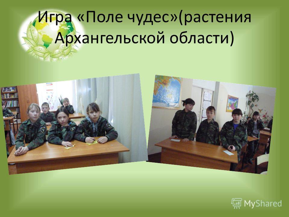 Игра «Поле чудес»(растения Архангельской области)