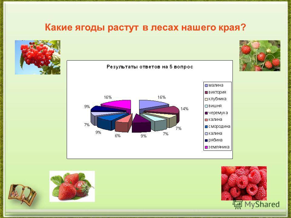 Какие ягоды растут в лесах нашего края?