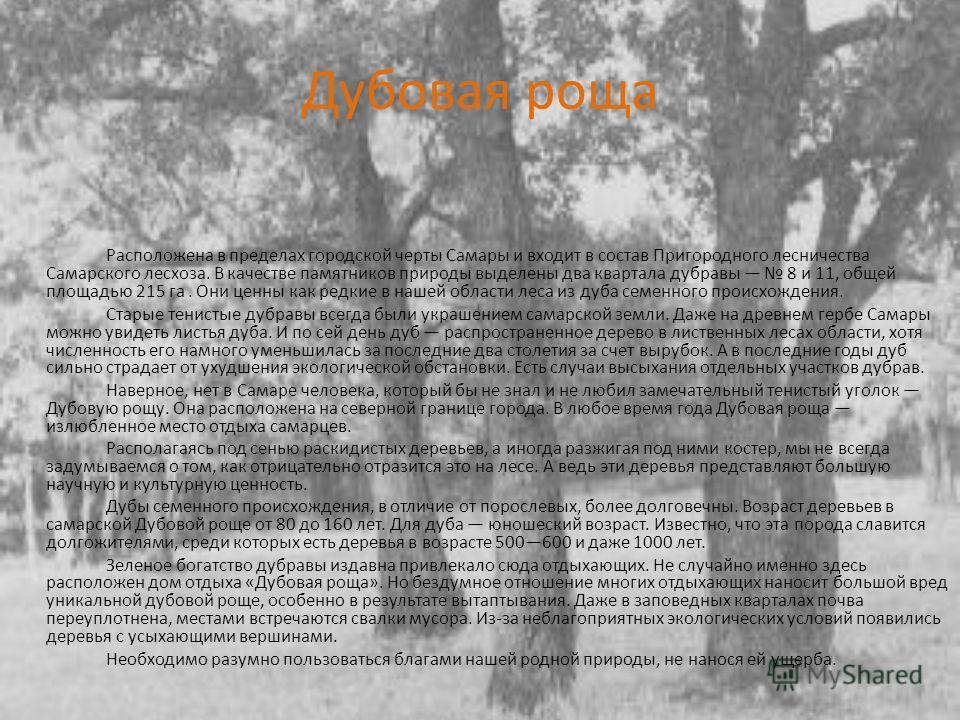 Дубовая роща Расположена в пределах городской черты Самары и входит в состав Пригородного лесничества Самарского лесхоза. В качестве памятников природы выделены два квартала дубравы 8 и 11, общей площадью 215 га. Они ценны как редкие в нашей области