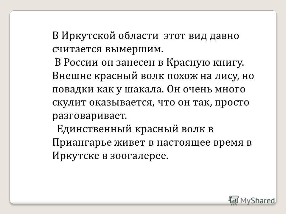 В Иркутской области этот вид давно считается вымершим. В России он занесен в Красную книгу. Внешне красный волк похож на лису, но повадки как у шакала. Он очень много скулит оказывается, что он так, просто разговаривает. Единственный красный волк в П