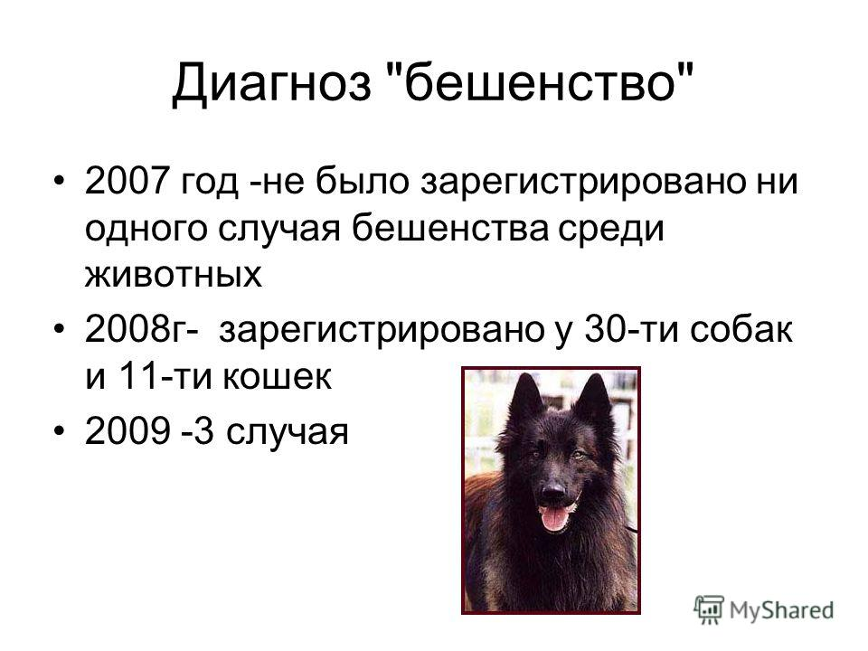 Диагноз бешенство 2007 год -не было зарегистрировано ни одного случая бешенства среди животных 2008г- зарегистрировано у 30-ти собак и 11-ти кошек 2009 -3 случая