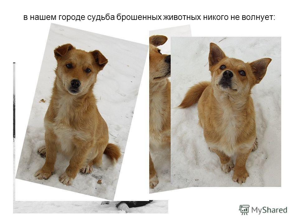 в нашем городе судьба брошенных животных никого не волнует: ни городские власти, ни жителей.