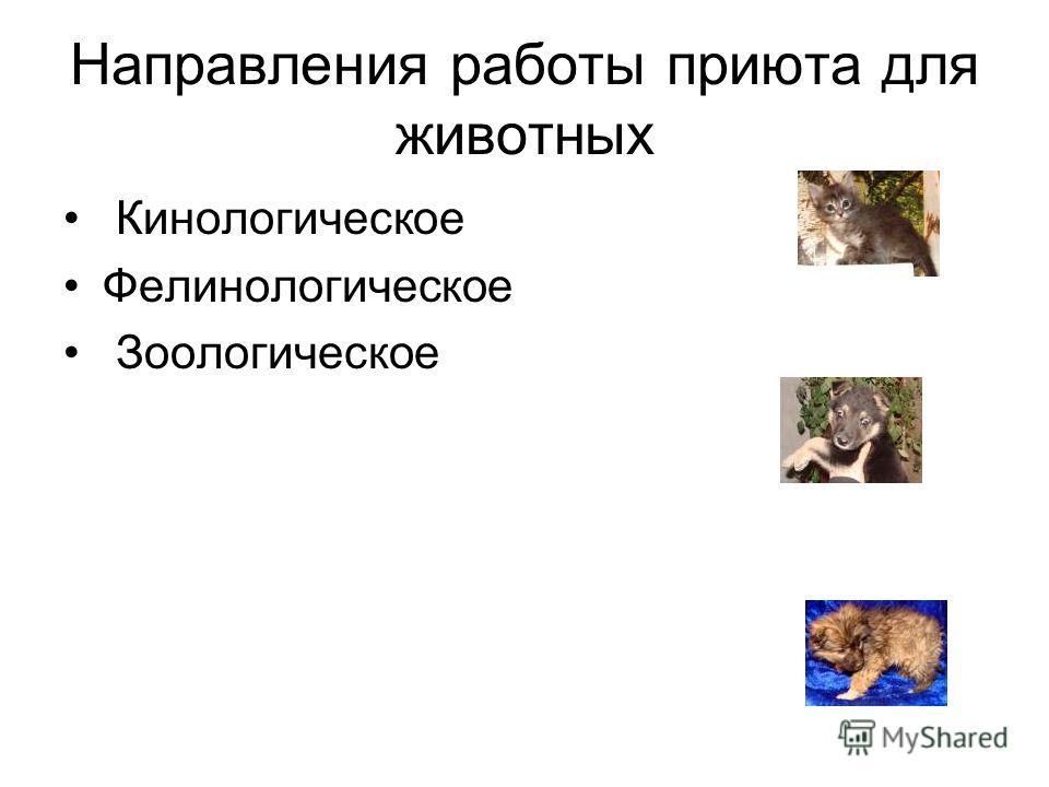 Направления работы приюта для животных Кинологическое Фелинологическое Зоологическое