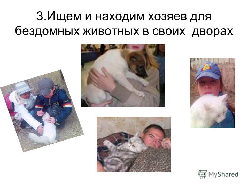 3.Ищем и находим хозяев для бездомных животных в своих дворах