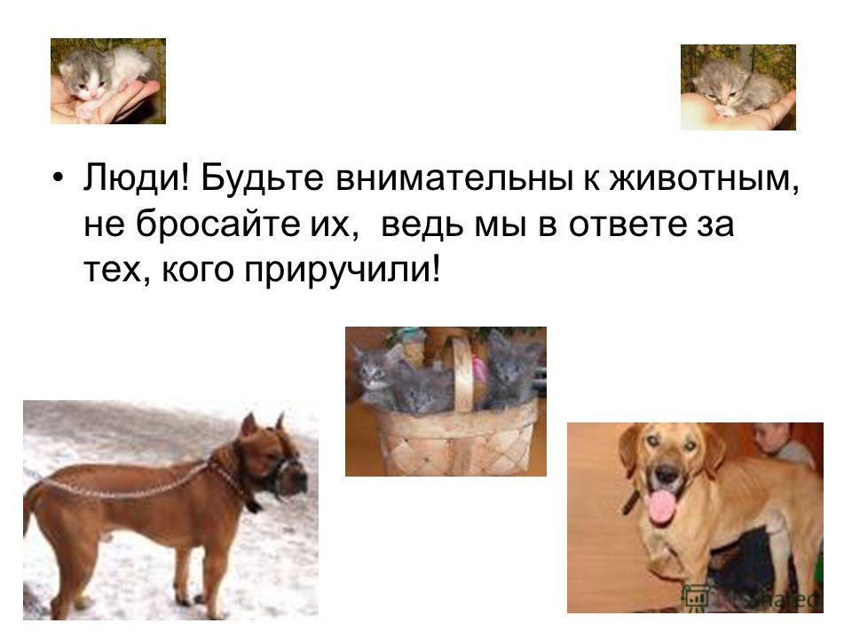 Люди! Будьте внимательны к животным, не бросайте их, ведь мы в ответе за тех, кого приручили!