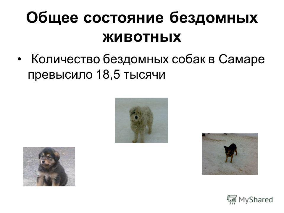 Общее состояние бездомных животных Количество бездомных собак в Самаре превысило 18,5 тысячи