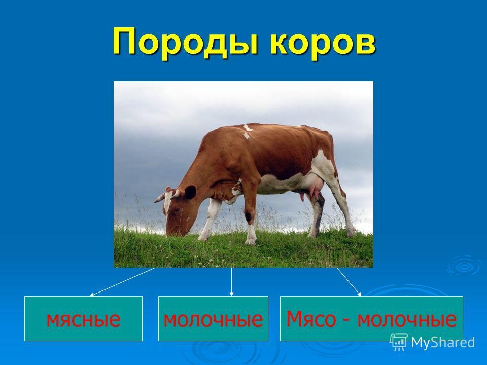 Породы коров мясныемолочныеМясо - молочные