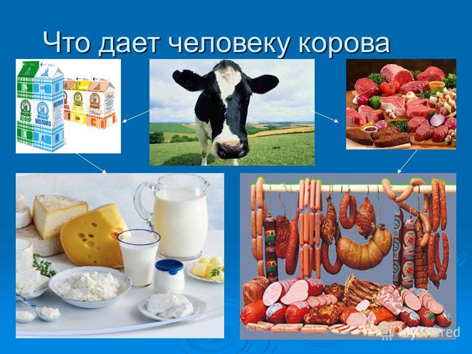 Что дает человеку корова