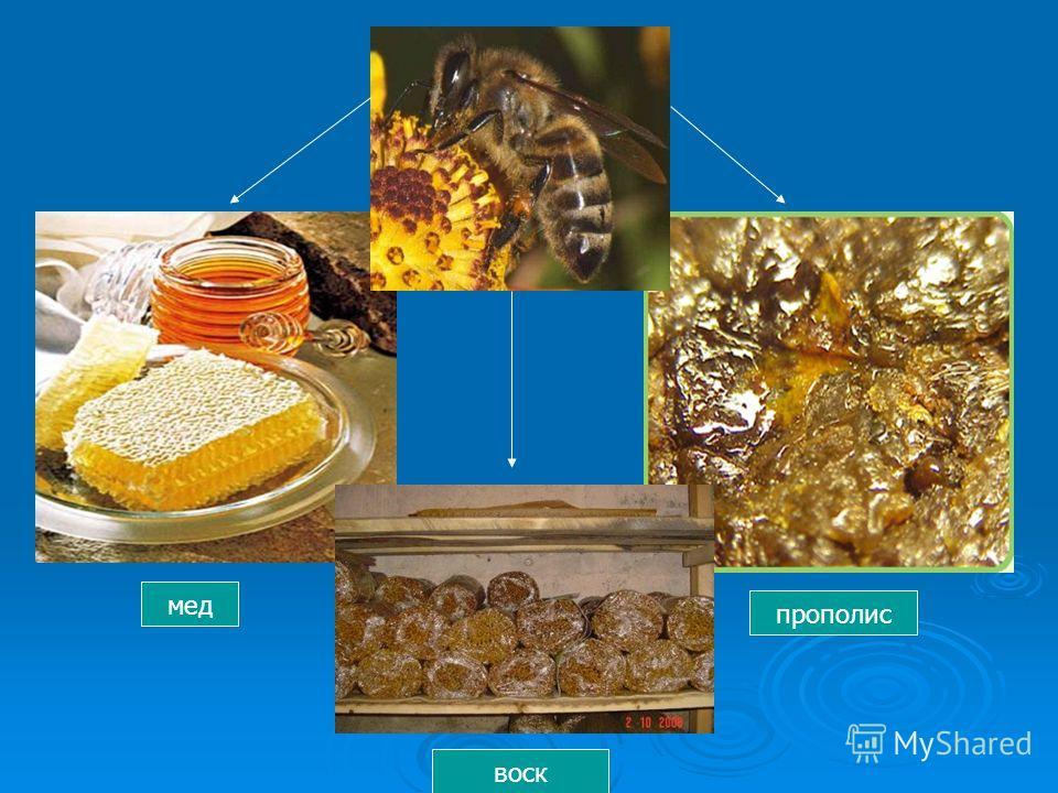 мед воск прополис