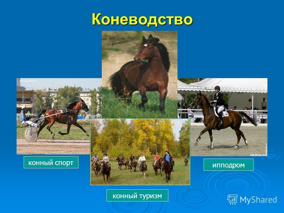 Коневодство конный спорт ипподром конный туризм