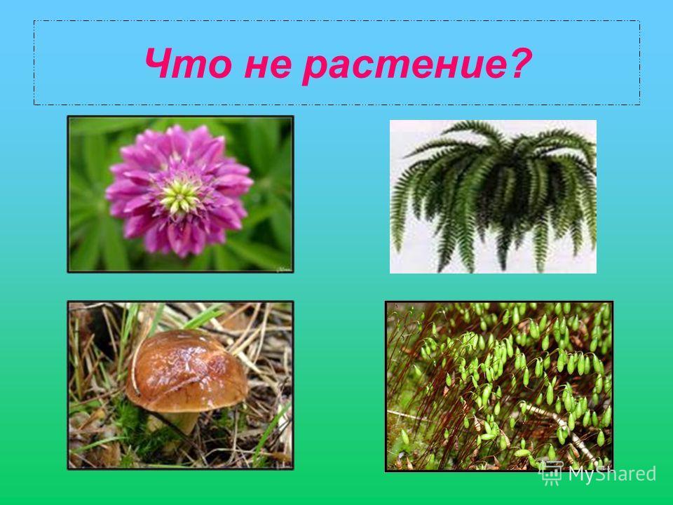Что не растение?