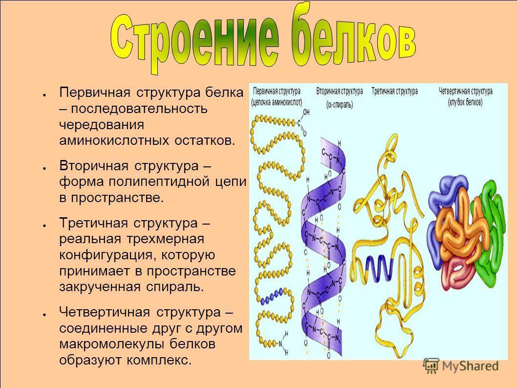 Первичная структура белка – последовательность чередования аминокислотных остатков. Вторичная структура – форма полипептидной цепи в пространстве. Третичная структура – реальная трехмерная конфигурация, которую принимает в пространстве закрученная сп
