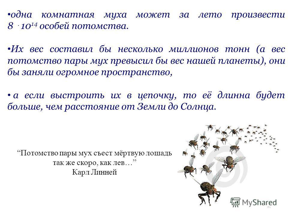 одна комнатная муха может за лето произвести 8. 10 14 особей потомства. Их вес составил бы несколько миллионов тонн (а вес потомство пары мух превысил бы вес нашей планеты), они бы заняли огромное пространство, а если выстроить их в цепочку, то её дл