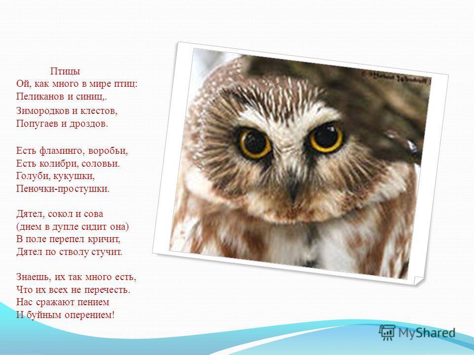 Птицы Ой, как много в мире птиц: Пеликанов и синиц,. Зимородков и клестов, Попугаев и дроздов. Есть фламинго, воробьи, Есть колибри, соловьи. Голуби, кукушки, Пеночки-простушки. Дятел, сокол и сова (днем в дупле сидит она) В поле перепел кричит, Дяте
