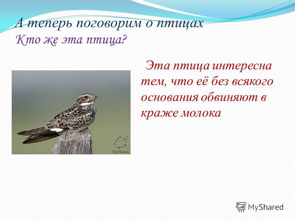 А теперь поговорим о птицах Кто же эта птица? Эта птица интересна тем, что её без всякого основания обвиняют в краже молока