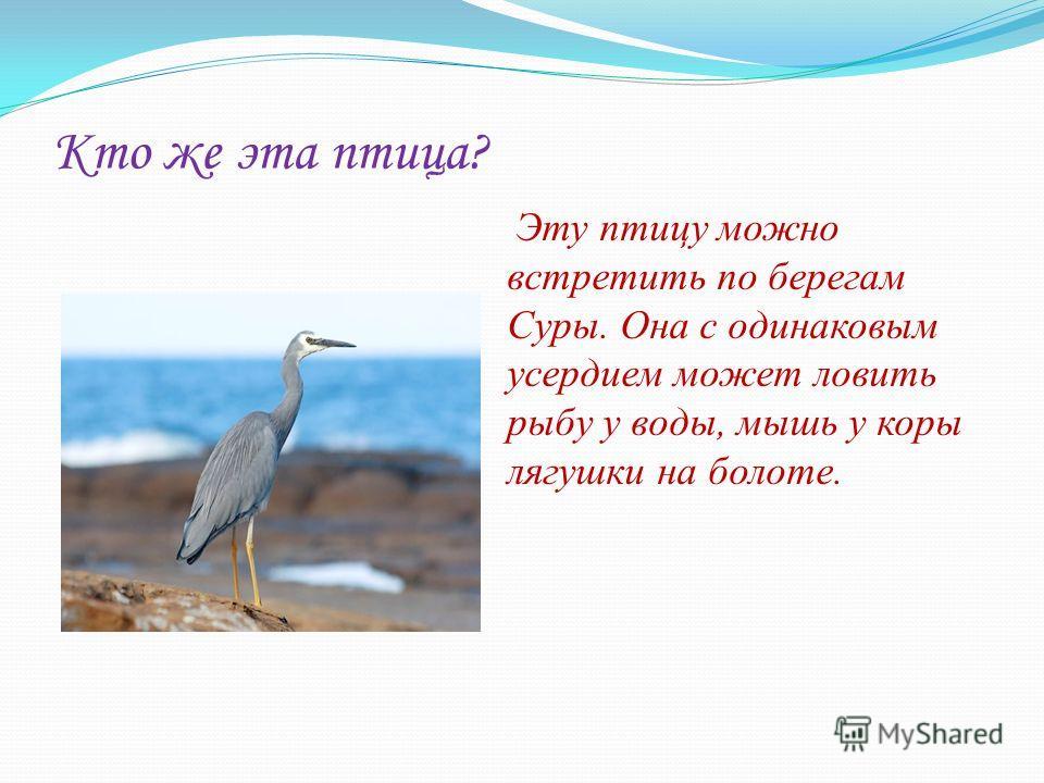 Кто же эта птица? Эту птицу можно встретить по берегам Суры. Она с одинаковым усердием может ловить рыбу у воды, мышь у коры лягушки на болоте.