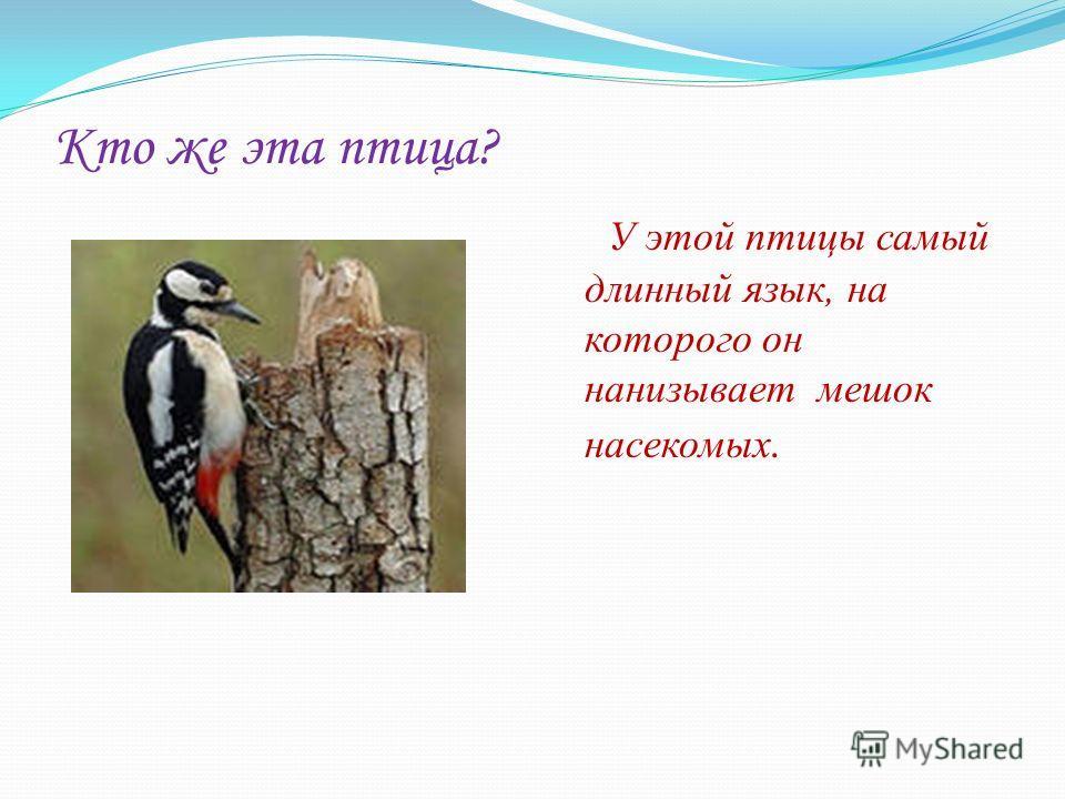 Кто же эта птица? У этой птицы самый длинный язык, на которого он нанизывает мешок насекомых.