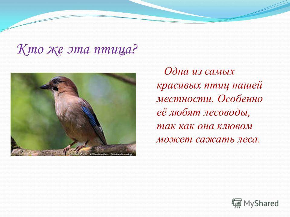 Кто же эта птица? Одна из самых красивых птиц нашей местности. Особенно её любят лесоводы, так как она клювом может сажать леса.