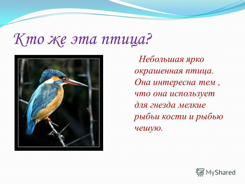Кто же эта птица? Небольшая ярко окрашенная птица. Она интересна тем, что она использует для гнезда мелкие рыбьи кости и рыбью чешую.