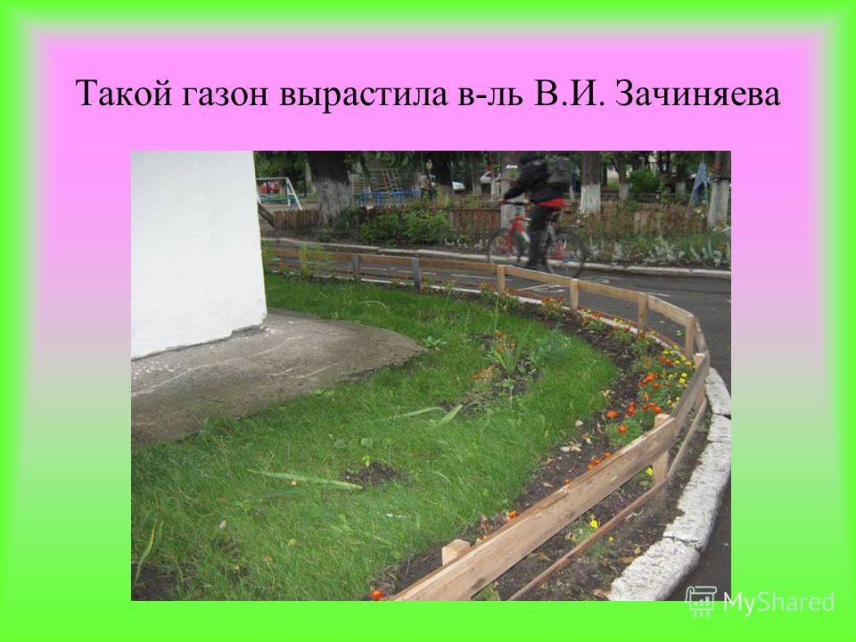 Такой газон вырастила в-ль В.И. Зачиняева