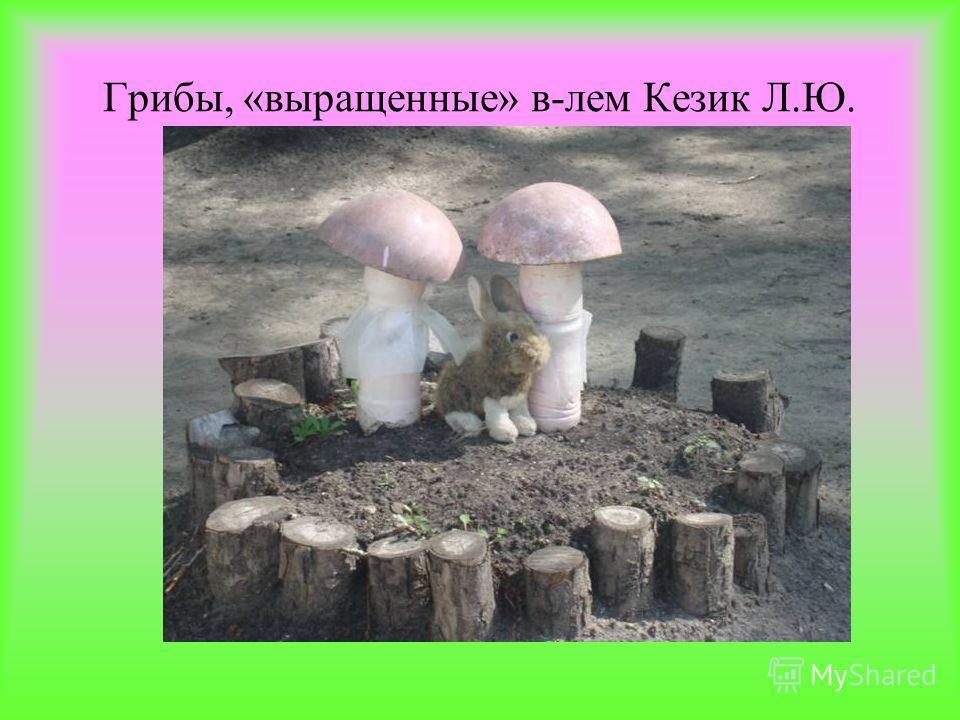 Грибы, «выращенные» в-лем Кезик Л.Ю.