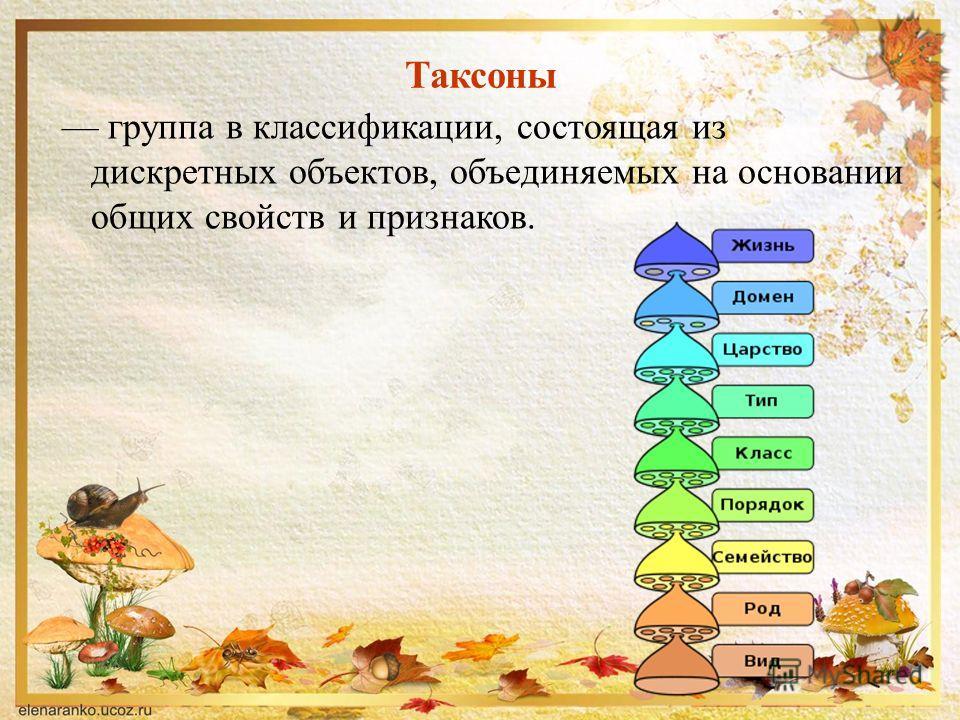 Таксоны группа в классификации, состоящая из дискретных объектов, объединяемых на основании общих свойств и признаков.