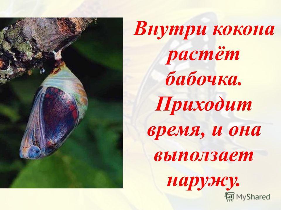 Внутри кокона растёт бабочка. Приходит время, и она выползает наружу.