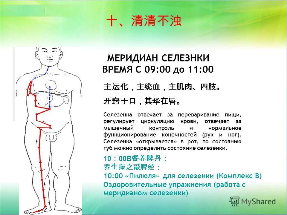 МЕРИДИАН СЕЛЕЗНКИ ВРЕМЯ С 09:00 до 11:00 10 00B 10:00 «Пилюля» для селезенки (Комплекс В) Оздоровительные упражнения (работа с меридианом селезенки) Селезенка отвечает за переваривание пищи, регулирует циркуляцию крови, отвечает за мышечный контроль