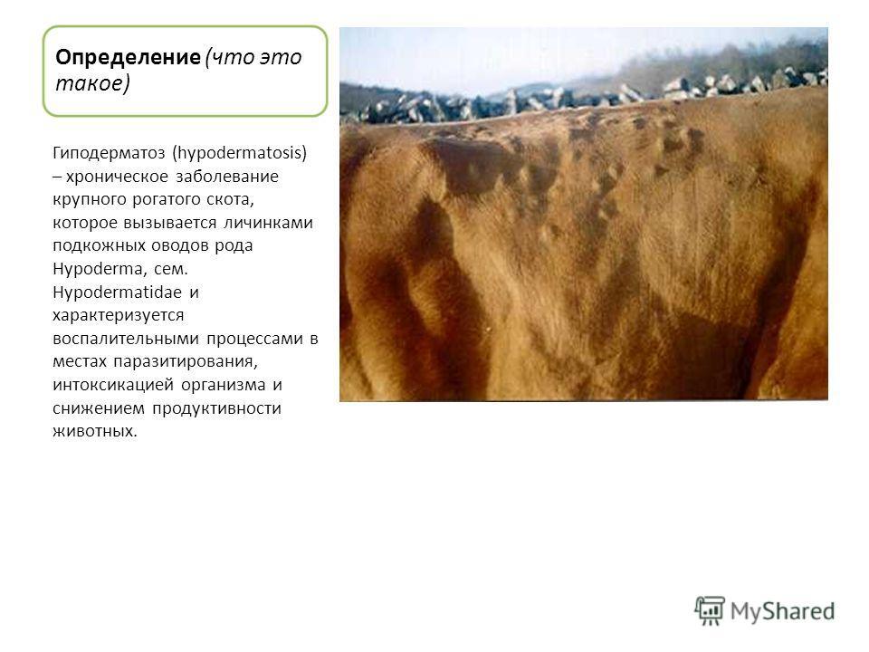 Определение (что это такое) Гиподерматоз (hypodermatosis) – хроническое заболевание крупного рогатого скота, которое вызывается личинками подкожных оводов рода Hypoderma, сем. Hypodermatidae и характеризуется воспалительными процессами в местах параз