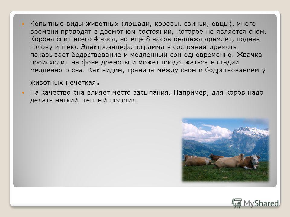 Копытные виды животных (лошади, коровы, свиньи, овцы), много времени проводят в дремотном состоянии, которое не является сном. Корова спит всего 4 часа, но еще 8 часов оналежа дремлет, подняв голову и шею. Электроэнцефалограмма в состоянии дремоты по
