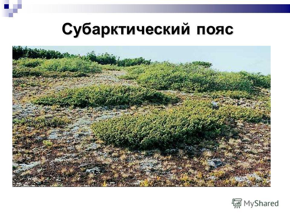Субарктический пояс