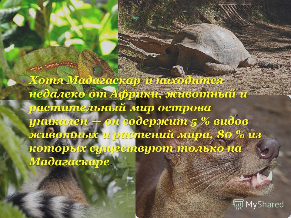 Хотя Мадагаскар и находится недалеко от Африки, животный и растительный мир острова уникален он содержит 5 % видов животных и растений мира, 80 % из которых существуют только на МадагаскареХотя Мадагаскар и находится недалеко от Африки, животный и ра