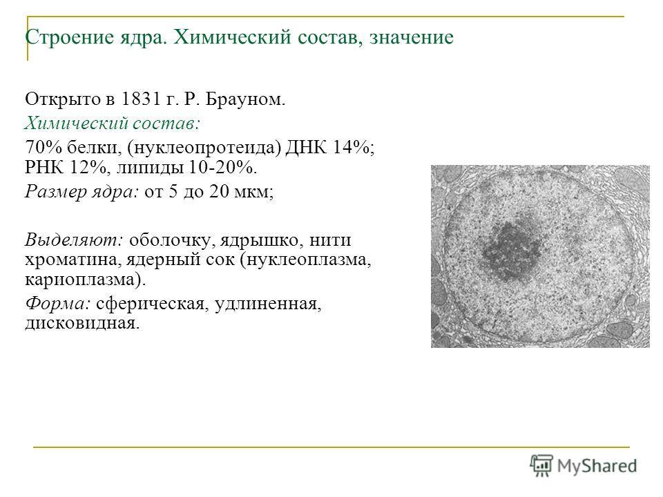Строение ядра. Химический состав, значение Открыто в 1831 г. Р. Брауном. Химический состав: 70% белки, (нуклеопротеида) ДНК 14%; РНК 12%, липиды 10-20%. Размер ядра: от 5 до 20 мкм; Выделяют: оболочку, ядрышко, нити хроматина, ядерный сок (нуклеоплаз