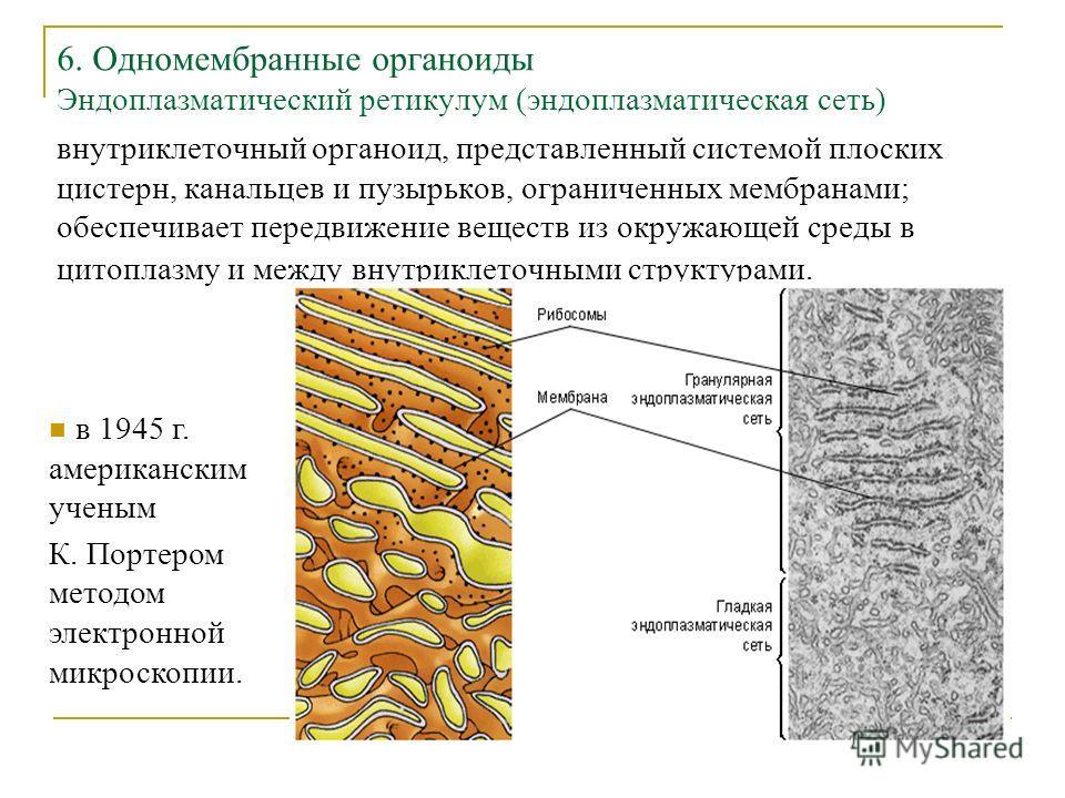 6. Одномембранные органоиды Эндоплазматический ретикулум (эндоплазматическая сеть) внутриклеточный органоид, представленный системой плоских цистерн, канальцев и пузырьков, ограниченных мембранами; обеспечивает передвижение веществ из окружающей сред