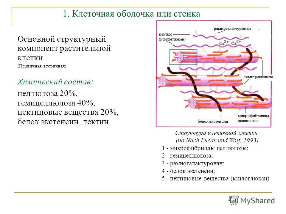 Основной структурный компонент растительной клетки. (Первичная, вторичная) Химический состав: целлюлоза 20%, гемицеллюлоза 40%, пектиновые вещества 20%, белок экстенсин, лектин. 1. Клеточная оболочка или стенка Структура клеточной стенки (по Nach Luc