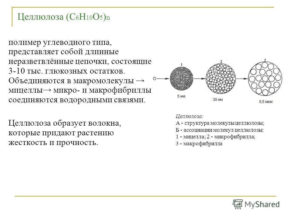Целлюлоза (С 6 Н 10 О 5 ) n полимер углеводного типа, представляет собой длинные неразветвлённые цепочки, состоящие 3-10 тыс. глюкозных остатков. Объединяются в макромолекулы мицеллы микро- и макрофибриллы соединяются водородными связями. Целлюлоза о