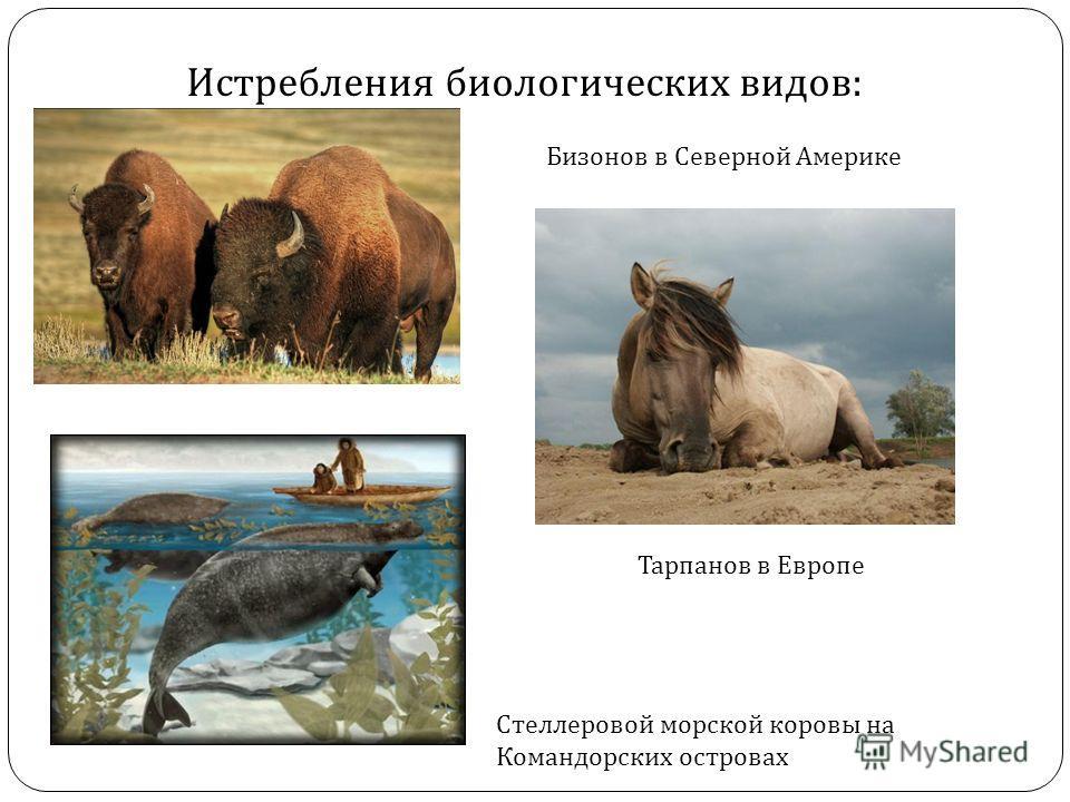 Истребления биологических видов : Бизонов в Северной Америке Тарпанов в Европе Стеллеровой морской коровы на Командорских островах