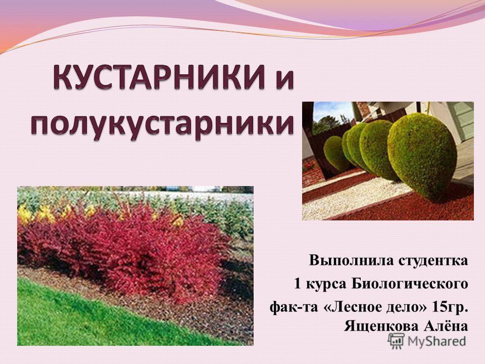 Выполнила студентка 1 курса Биологического фак-та «Лесное дело» 15гр. Ященкова Алёна